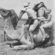 Camel Rides at Forrest