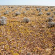 Colours of the Nullarbor